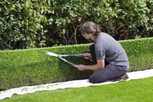 trim the bush